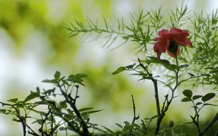 やり方 の の 薔薇 挿し木 バラを挿し木で増やす方法その2。「休眠挿し」のやり方紹介