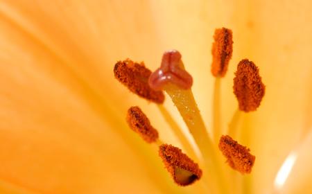 花粉 ユリ の