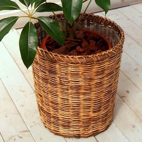 観葉植物「ツピタンサス(L)・バスケット」