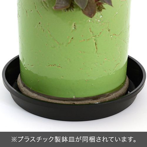 多肉植物寄せ植え「アンティークポット・グリーン」