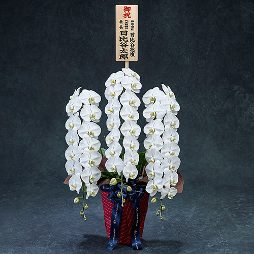 手渡し配達のプレミアム胡蝶蘭(白)3本立ち【東京都内エリア限定】