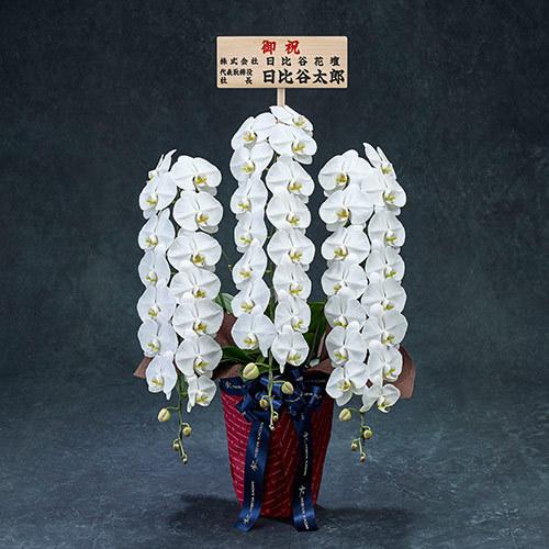 手渡し配達のプレミアム胡蝶蘭(白)3本立ち【大阪市内エリア限定】