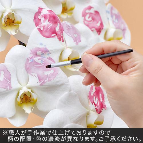 胡蝶蘭「日比谷花壇デザイナーズ化粧蘭(BLOOM)」