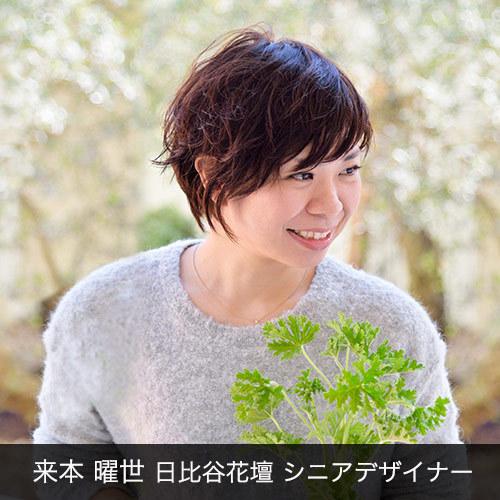 胡蝶蘭「日比谷花壇デザイナーズ化粧蘭(KIKU)」