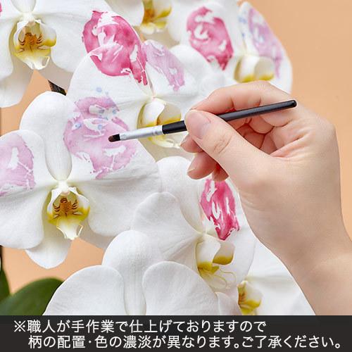 胡蝶蘭「日比谷花壇デザイナーズ化粧蘭(KIN‐GYO)」