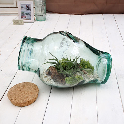 観葉植物「エアープランツ ボトルキット」