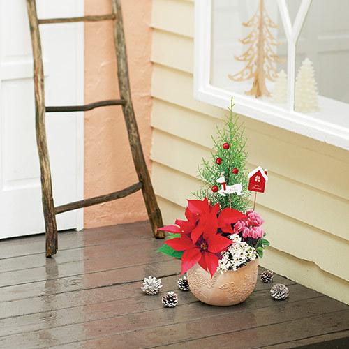 クリスマス コンテナプランツ「クリスマスガーデン」