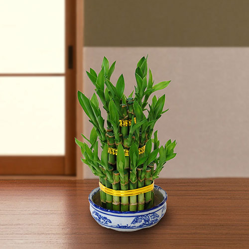 観葉植物「開運竹ミリオンバンブー(タワー3段)」