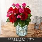 おうちで楽しむ季節の花「ロージィミックス」レッド系