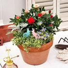 季節の寄せ植え「ミニバラミックスガーデン」