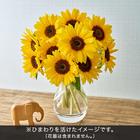 おうちで楽しむ季節の花「サンリッチひまわり(中心茶色)」