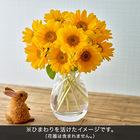 おうちで楽しむ季節の花「サンリッチひまわり10本」