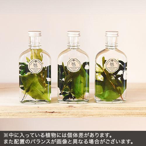 URBAN GREEN MAKERS ハーバリウム「ボタニカル」インテリアセット【沖縄届不可】