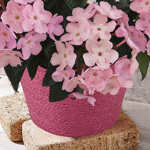 季節の花鉢 におい桜「ココ」