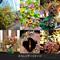 「日比谷花壇 2020 カレンダー」