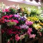 Hibiya-Kadan Style そごう横浜店