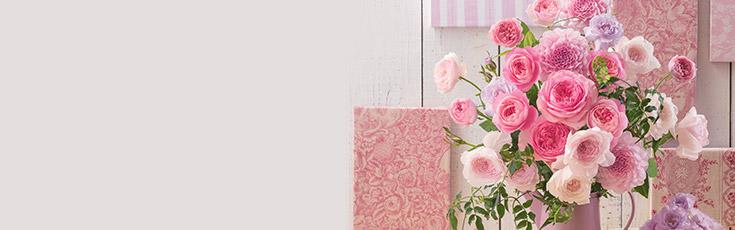 母の日の花のお手入れ 蘭の鉢植|2016年母の日|日比谷花壇