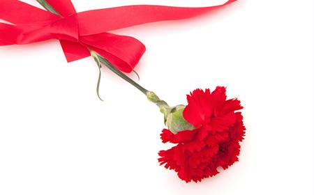 「カーネーション 1本花束」の画像検索結果