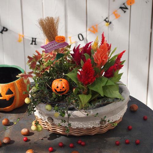 季節の寄せ鉢「ハッピーハロウィン・バスケット」